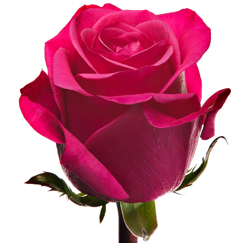 Розы штучно